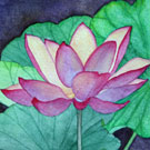 The Lotus Flower Series