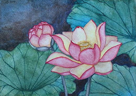 Lotus Flower Art Lotus Flowers  3  watercolor