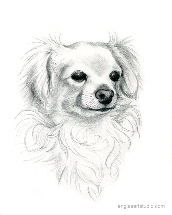 Chihuahua Mix Dog, Custom Pet Portrait, Hand Drawn Dog Portrait