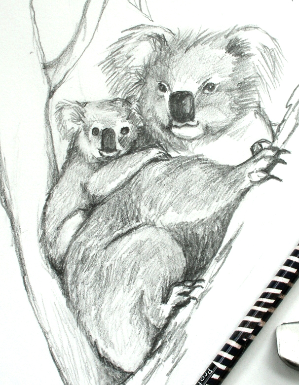 drawing of mother koala with baby, koala bear